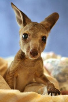 We'd be jumping for joy if we bumped into one of these bouncy critters - a baby kangaroo!
