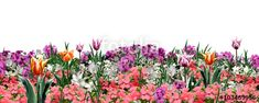 "Download the royalty-free photo ""Spring flowers on white background. Floral pattern. Digital illustration"" created by sofiartmedia at the lowest price on Fotolia.com. Browse our cheap image bank online to find the perfect stock photo for your marketing projects!"
