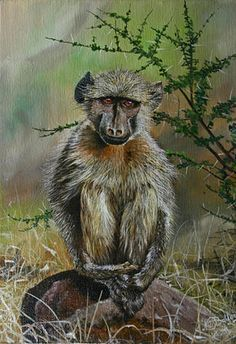 Nico Bulder - young baboon