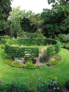 A round gravel garden cut out of a sunny lawn, encircled by a pleached hornbeam hedge.
