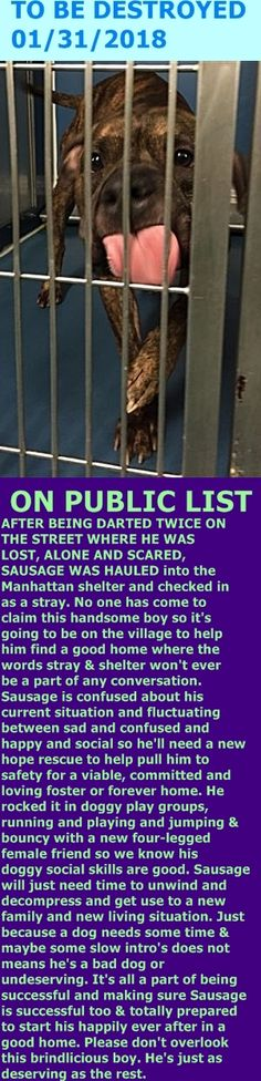 MURDERED 01/31/2018 --- Hello, my name is Sausage. My animal id is #19182. I am a male brown brindle dog at the Manhattan Animal Care Center. The shelter thinks I am about 4 years old.  I came into the shelter as a stray on 25-Jan-2018. http://nycdogs.urgentpodr.org/sausage-19182/