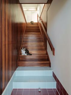 Floors coloured blue and off-white were used to divide up the spaces and mark their uses. Spanish Architecture, Contemporary Architecture, Interior Architecture, Stair Handrail, Floor Colors, Dezeen, Decoration, Stairs, Farmhouse
