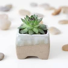 Cactus De Porcelana Fría   Buscar Con Google