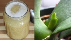 Pokud vám orchidej dlouho nekvetla, vezměte 3 stroužky česneku a zkuste tento tip, brzy se objeví první puky! - Zkustosám cz Pickles, Glass Of Milk, Cucumber, Fruit, Ethnic Recipes, Food, Image, Orchid Types, Eten