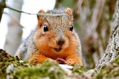 Who wouldn't go nuts for that face? by MiaLeePhotography.deviantart.com