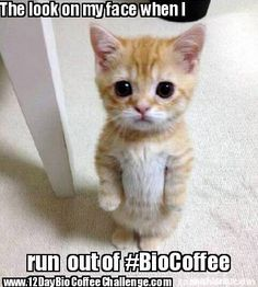 Don't run out of The Healthiest coffee in the world. Keep your pantry stocked with tasty, healthy BioCoffee.  Have you taken the 12Day Bio Coffee challenge yet? Visit us at www.BioCoffee.com to get started  #BioCoffee12Day