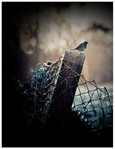 Blue bird, abstract photography