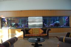 Four years ago Orphek set the new standard for LED Lighting products for reef…