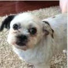 Lost Dog - Mix - Morrow, OH, United States 45152