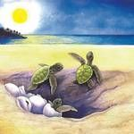 View 'Hatchlings' Green Sea Turtles by Savanna Redman and purchase the artwork as fine art print, canvas and framed wall art Sea Turtle Painting, Sea Turtle Art, Baby Sea Turtles, Turtle Love, Turtle Shells, Sea Turtles Hatching, Hatch Drawing, Underwater Painting, Easy Animals