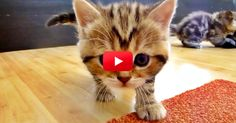 This Kitten Is TOO MUCH! You Have To See Her Hilarious Antics! | The Animal Rescue Site Blog