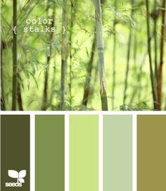 color stalks // design seeds by DaisyCombridge