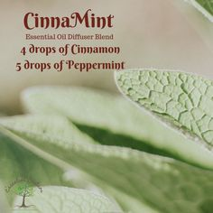 Cinnamint is in all the diffusers this morning! Usually you think of cinnamon as more of a fall or winter aroma but blended with peppermint it is just refreshing! Perfect for this summer morning! This blend reminds me of being a kid and chewing Big Red! Essential Oil Diffuser Blends, Essential Oils, Winter Essentials, Diffusers, Peppermint, Breathe, Cinnamon, Fall, Summer