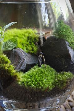 I want one of these! Miniature Garden good for my desk in the craft room or at work!