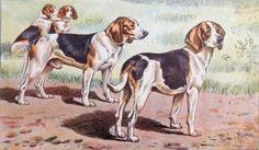 #Art #Poster: Plate 47 - Beagles http://ift.tt/29PDU1t (via @zedign)