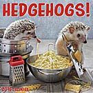 Hedgehogs 2016 Wall Calendar: 9781554569618 | | Calendars.com