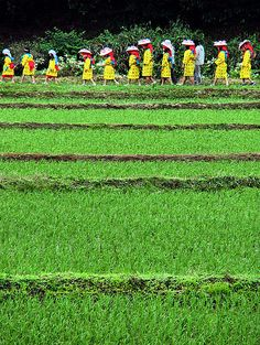 Tauebayashi Matsuri Festival (Rice planting the old way), Iwami, Japan: photo by Ojisanjake