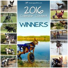 Our calendar made it on Dogster's list of 10 Great Dog Calendars for 2016! Wouldn't this make a great stocking stuffer? These are currently $7.46, and don't forget, all proceeds go to the Handicapped Pets Foundation to benefit dogs from all over just like yours :)