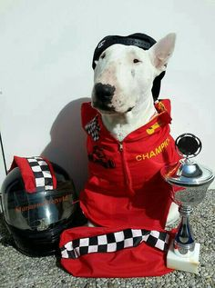 Billy Verstappen F1 LOL