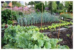 . El Jardin de Margarita .: Una huerta muy pequeña pero muy aprovechada !!
