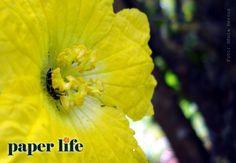Flor de bucha vegetal