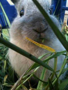 Bunny, you have a blade of grass in your teeth - September 30, 2012