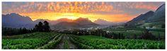 Franschoek- La Clé des Montagnes Home Of, Cape Town, Villas, Vineyard, Africa, Places, Outdoor, Beautiful, Mountains