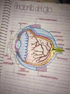 Ideas Diy Cuadernos Medicina For 2019 Medicine Notes, Medicine Student, Nursing School Notes, College Notes, Science Biology, Medical Science, Studying Medicine, Bullet Journal School, School Study Tips