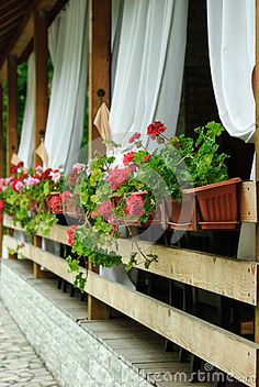 Photo about Empty terrace with white shades and red Geranium flowers in planters hanging from the side of the balcony. Image of nobody, flowers, floor - 55842219 Geranium Flower, Red Geraniums, Flower Planters, Balcony, Empty, Terrace, Shades, Stock Photos, Flowers