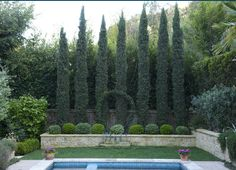 Love the tall cypress(?) trees behind the small shrubs.