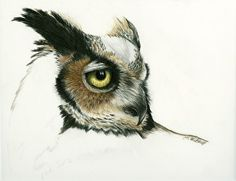 "Study of Great Horned Owl by Heather A. Mitchell Colored Pencil ~ 8"" x 10"""