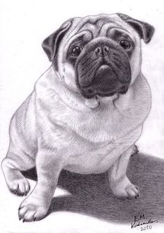 Brucey the Pug by Elkenar on DeviantArt Pug Illustration, Illustrations, Amazing Drawings, Cool Drawings, Pug Names, Pugs And Kisses, Pug Art, Animal Drawings, Pencil Drawings