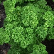 There have been debates about the growing of Organic foods globally. For as to make the right decision, we must carefully examine the advantages and disadvantages of growing and eating organic foods. Parsley Sauce Recipes, Green Mango Salad, White Clam Sauce, Plant Delivery, Herb Seeds, Eating Organic, Edible Plants, Types Of Soil, Nutrition