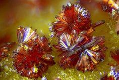 underthescopemin:  Carminite, Beudantite  Carminite crystals sprays on beudantite.  Photo & collection Chollet Pascal
