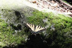 Butterfly on a rock near Middle Branch falls