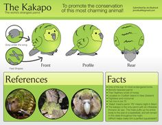 avianawareness: ***My kakapo plush is now up to be voted on! HERE (FB)*** There is a challenging kakapo, but hey, kakapo love all around…! Vote for this adorable, adorable creature!