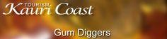 The Kauri Gum Diggers - part of the Kauri Coast History