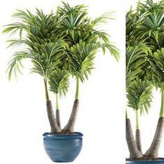 PLANTS 148
