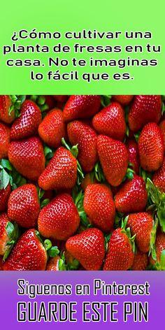Growing Vegetables, Fruits And Veggies, Garden Nursery, Green Life, Compost, Organic Gardening, Strawberry, Patio, Health