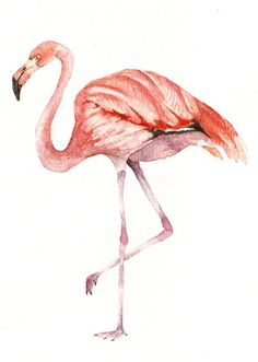 pink flamingo | septagon studios