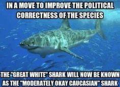 1000+ ideas about Shark Meme on Pinterest | Shark Week Memes ...
