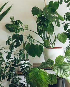 Leaf love #HaarkonHouse