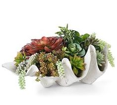 Succulents are loved for their lush rosettes and stunning hues that range from warm tones to cool greens. This arrangement is assembled by hand in a shell-shaped planter for the laidback feel of a beach discovery. Faux Succulents, Faux Plants, Succulents Garden, Indoor Plants, Succulent Containers, Container Flowers, Container Plants, Potted Plants, Pottery Barn