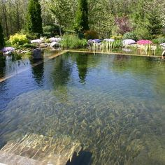 Outdoor Photos Natural Swimming Pool Design Ideas, Pictures, Remodel, and Decor