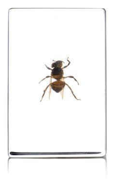 honey bee in resin