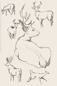 Deer study again by WolfSkullJack on DeviantArt
