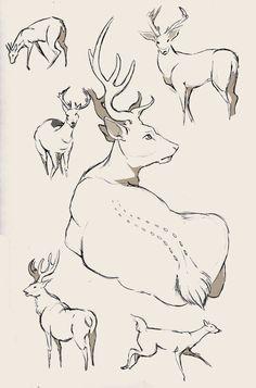 Deer study again by WolfSkullJack on DeviantArt
