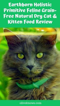 What You Should Know About Sick Cat Symptoms Kitten Food Cats