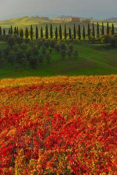 Autumn - Val d'Orcia Region | Tuscany, Italy