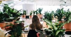 Estas+oficinas+tienen+más+plantas+que+empleados+por+una+razón